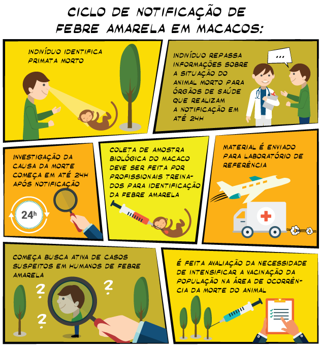 Infográfico Macacos1